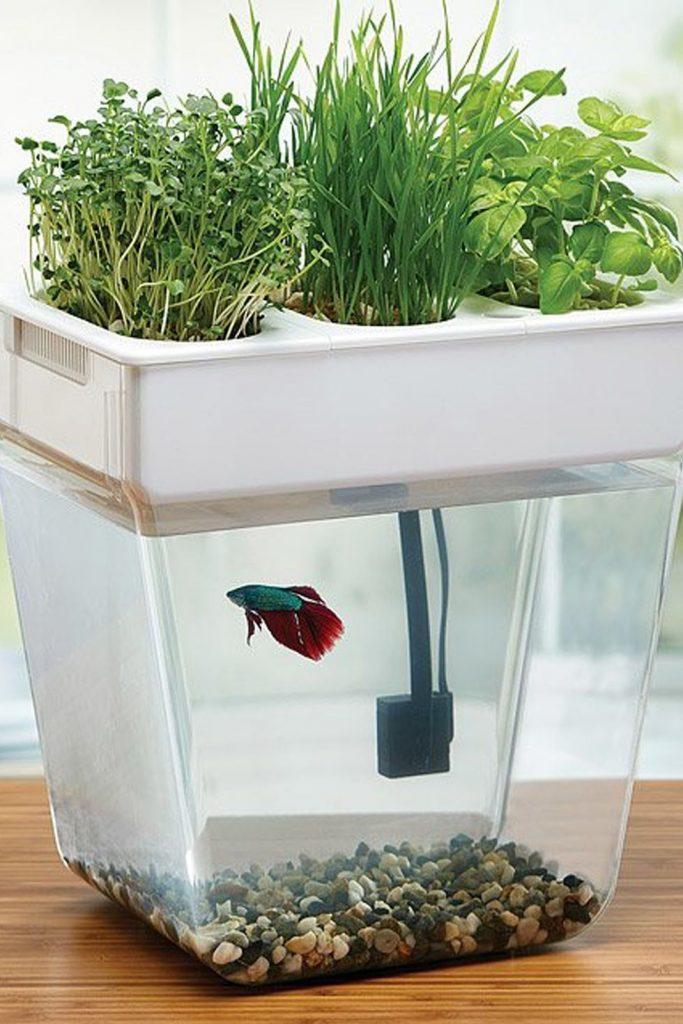 เลี้ยงปลาและปลูกพืชผักสมุนไพรไปด้วยกันได้ในเวลาเดียวกัน แค่มองก็ผ่อนคลาย